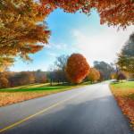 105086__road-autumn-landscape_p